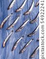 Fish pattern. Fresh anchovies on blue 54922241