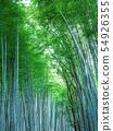 교토 사가 노의 대나무 숲 54926355
