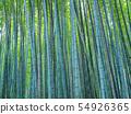 Bamboo grove in Sagano, Kyoto 54926365