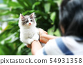 Beautiful kitten on the palm ,Woman is stroking a 54931358