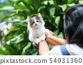Beautiful kitten on the palm ,Woman is stroking a 54931360