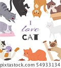 Cute kitty cat vector poster with different kitten breeds, toys, and food. Multi-colored pussycats 54933134