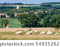 Herd of cows grazing in countryside with hills, 54935262