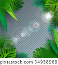 Vector Summer Illustration with Tropical Palm Leaves on Transparent Background. Exotic Plants and 54938969