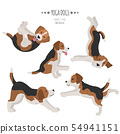 Yoga dogs poses and exercises. Beagle clipart 54941151
