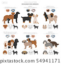 Designer dogs, crossbreed, hybrid mix pooches 54941171