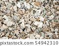 Shells on the ocean beach, background 54942310