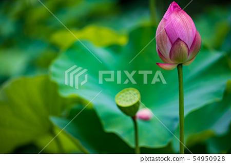 꽃 54950928