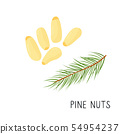 Flat pine nuts, cedar isolated on white background 54954237