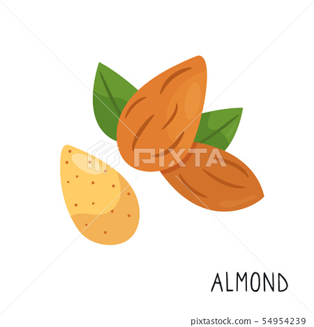 Cartoon flat almond isolated on white background 54954239