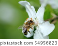 bee and apple tree 54956823
