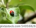 lady bug on leave 54956826