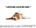 beagle dog with words on white background  54956877