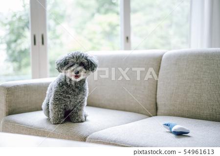 狗的生活方式 54961613