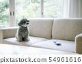 Dog lifestyle 54961616