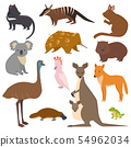 Australian wild animals cartoon collection australia popular animals like platypus, koala, kangaroo 54962034