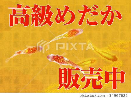 Luxury Medaka Illustration 54967622
