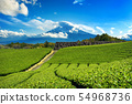 Fuji mountains and green tea plantation  54968736