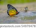 Butterfly 54970478