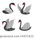 Vector set of beautiful watercolor black swans. 54972422