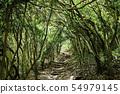 후쿠오카 현 이토 시마시 케야의 대문 공원 숲 터널 54979145