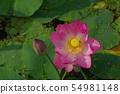 Two thousand years Lotus 54981148