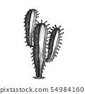 Tall Treelike Habit Desert Cactus Vintage Vector 54984160