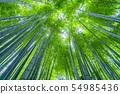 【Kanagawa Prefecture】 Bamboo forest in Kamakura Rikokuni 54985436