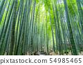 [Kanagawa] Kamakura Bamboo grove at Hokokuji Temple 54985465