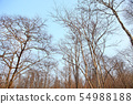 Dead and dried tree in forest after bushfires. 54988188
