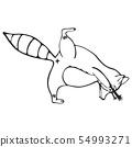 Doodle outline set of raccoon do yoga 54993271