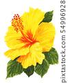 Hibiscus 19718pix7 54996928