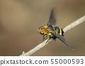 Image of hoverfly(Syrphidae) on branch on a 55000593