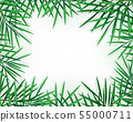 Tropical palm leaves and jungle plants on white. 55000711