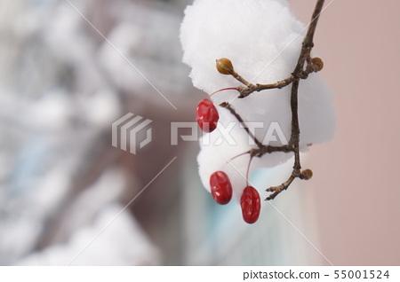 겨울 열매 산수유 먹이 55001524