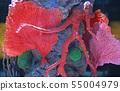 Corals in aquarium tank 55004979