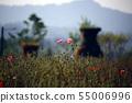 양귀비 꽃밭 55006996