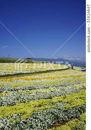 Shinshu Flower Festa 2019 55014647
