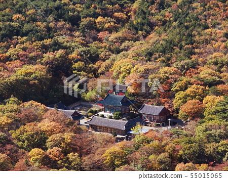 범어사의 가을단풍 55015065