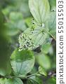왕 오색 나비, 애벌레, 나비 나비 부화 55015503