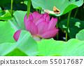 Gyoda ancient lotus flower 55017687