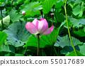 Gyoda ancient lotus flower 55017689