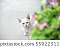 새끼 고양이와 꽃 도둑 고양이 흰 고양이 55022311