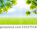 Nature spring background green leaves and sun beam 55037558