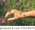 Woman hand touch to wild carnation flower on 55039474