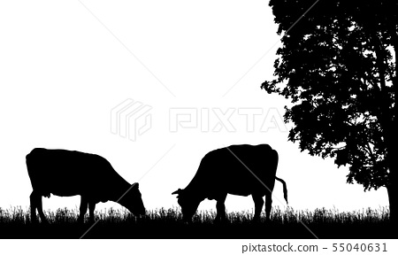 Realistic illustration with two silhouette of cow 55040631