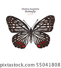 Beautiful colorful Hestina Assimilis butterfly 55041808