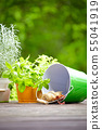 Fresh herbs with gardening tools 55041919
