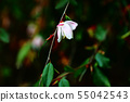 玫瑰的Elina 55042543