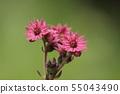 거미줄 반다이 소우의 꽃 55043490
